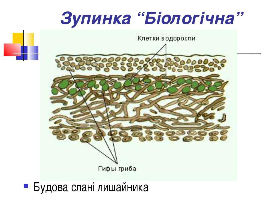 """Зупинка """"Біологічна"""" Будова слані лишайника"""