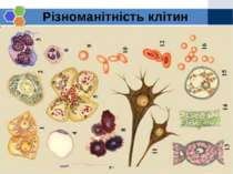 Різноманітність клітин