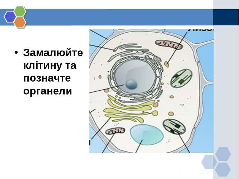Замалюйте клітину та позначте органели
