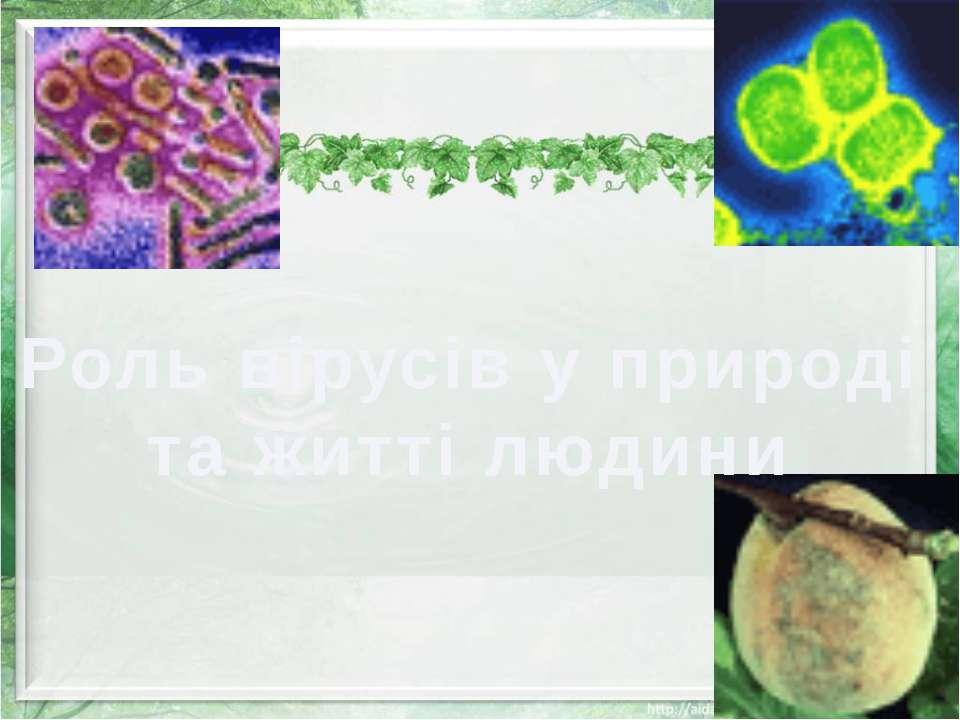 Роль вірусів у природі та житті людини