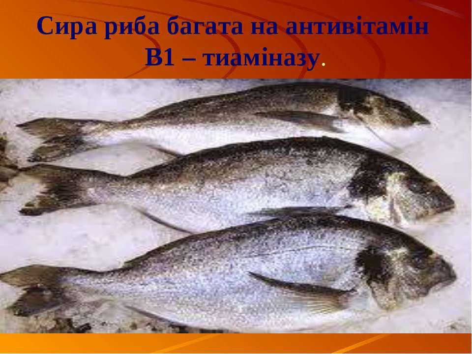 Сира риба багата на антивітамін В1 – тиаміназу.