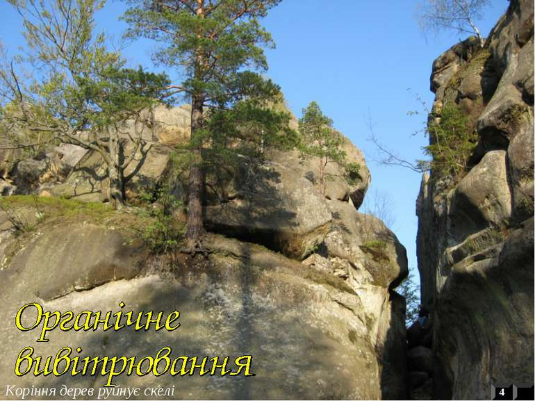 4 Коріння дерев руйнує скелі