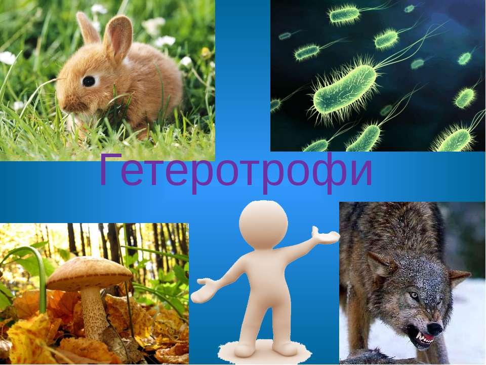 Гетеротрофи