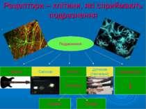 Рецептори – клітини, які сприймають подразнення . Подразнення Звукові Світлов...