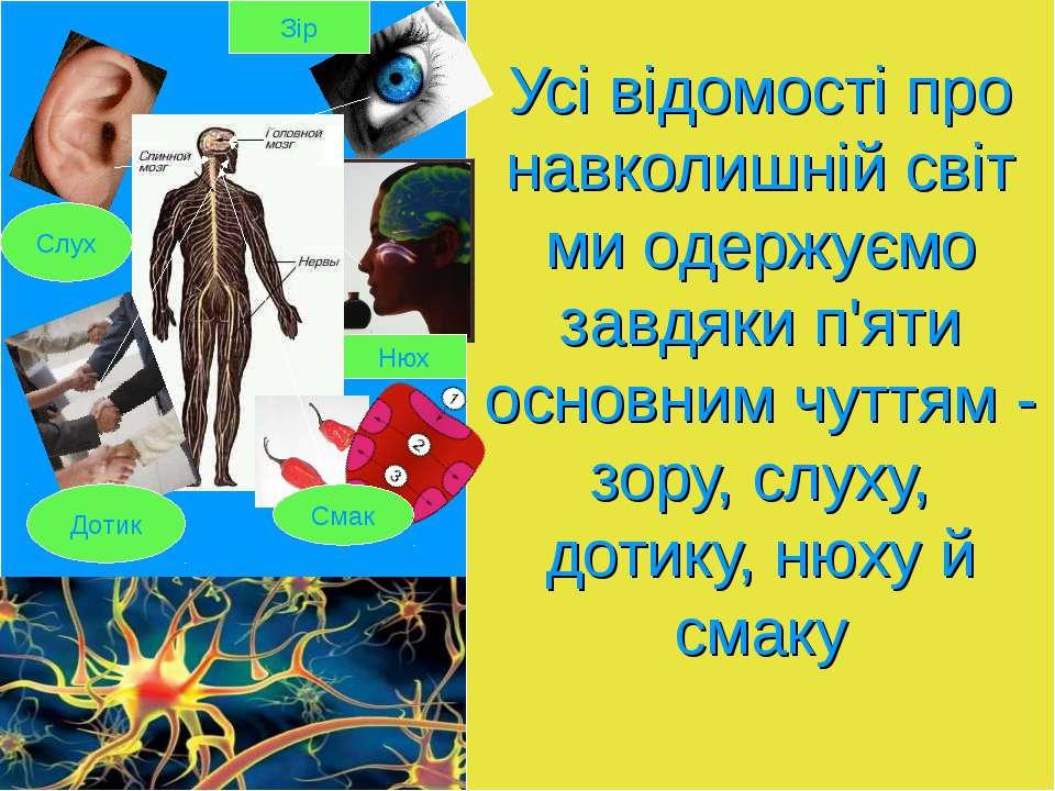 Усі відомості про навколишній світ ми одержуємо завдяки п'яти основним чуттям...