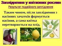 Таким чином, після запліднення з насінних зачатків формується насіння, а сама...