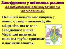 Насінний зачаток має покрив, у якому є отвір – пилковхід або мікропіле, що ве...