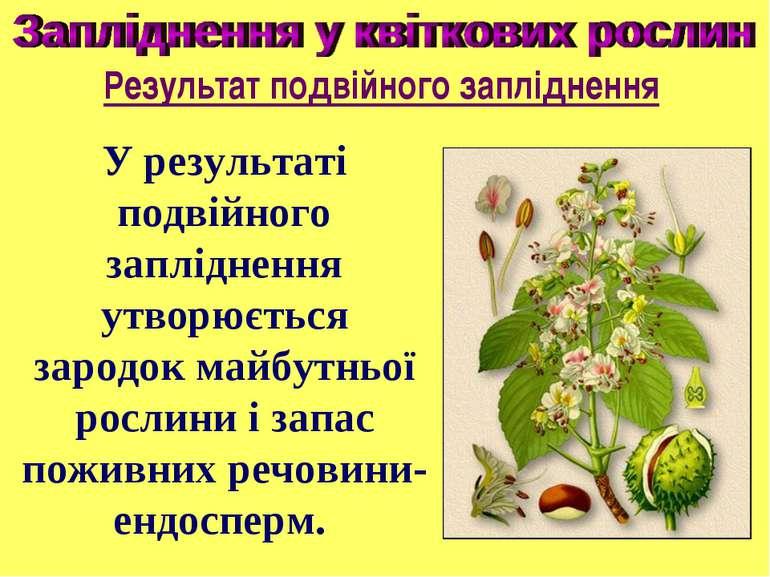 У результаті подвійного запліднення утворюється зародок майбутньої рослини і ...