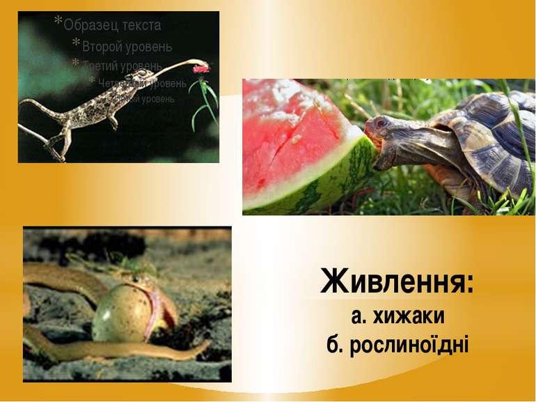 Живлення: а. хижаки б. рослиноїдні