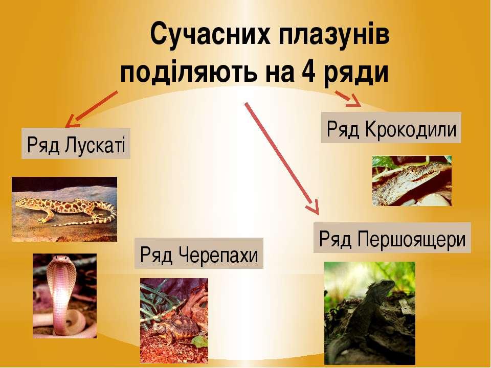 Сучасних плазунів поділяють на 4 ряди Ряд Лускаті Ряд Черепахи Ряд Крокодили ...