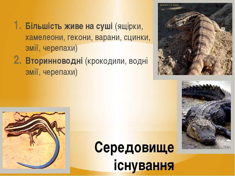 Середовище існування Більшість живе на суші (ящірки, хамелеони, гекони, варан...