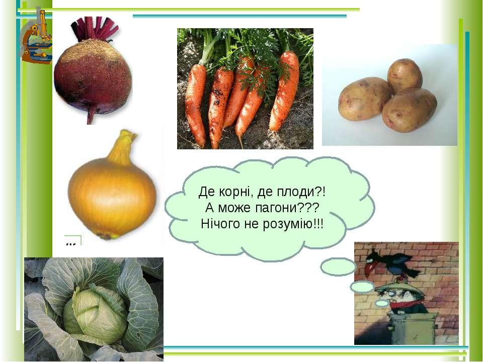 Де корні, де плоди?! А може пагони??? Нічого не розумію!!!