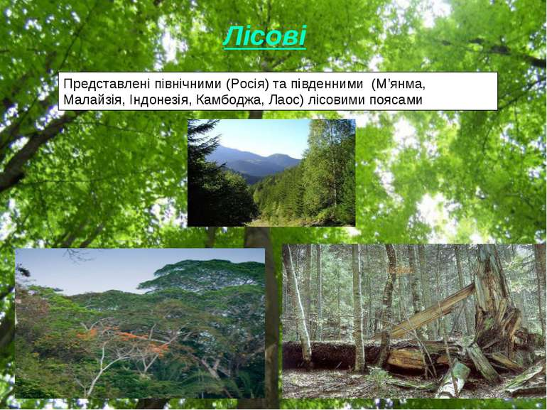 Лісові Представлені північними (Росія) та південними (М'янма, Малайзія, Індон...