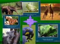 Знайомтесь, тварини, яких ми тут можемо зустріти
