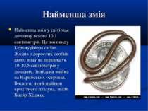 Найменша змія Найменша змія у світі має довжину всього 10,1 сантиметрів. Це з...