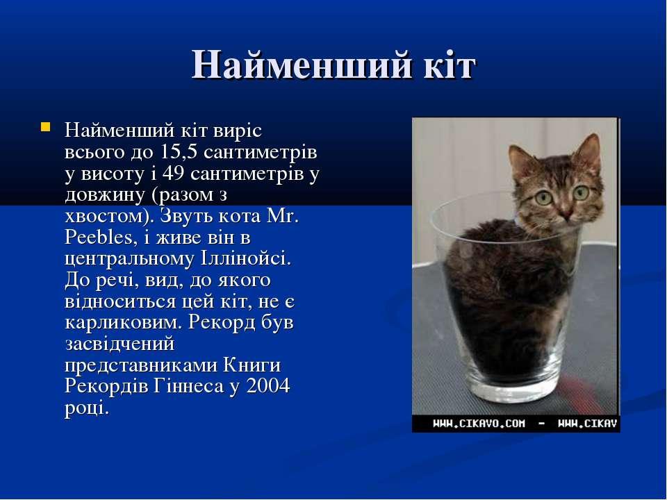 Найменший кіт Найменший кіт виріс всього до 15,5 сантиметрів у висоту і 49 са...