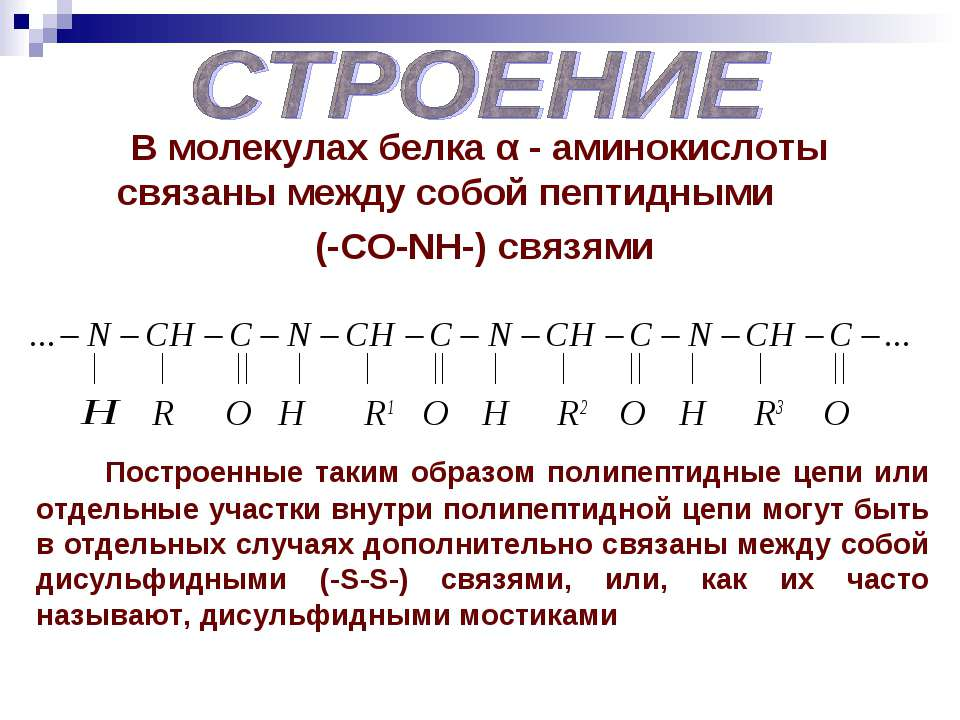 В молекулах белка α - аминокислоты связаны между собой пептидными (-СO-NH-) с...