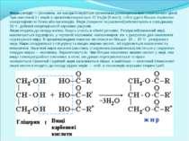 Жири (ліпіди) — речовини, які використовуються організмом дляенергетичних і п...