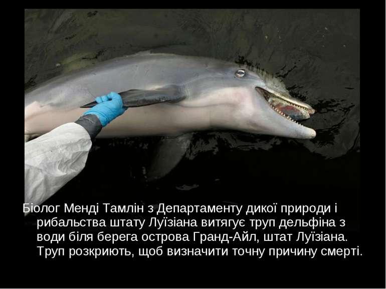 Біолог Менді Тамлін з Департаменту дикої природи і рибальства штату Луїзіана ...