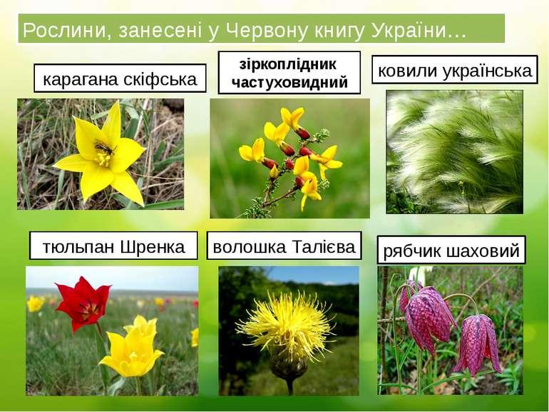 Рослини, занесені у Червону книгу України… карагана скіфська зіркоплідник час...