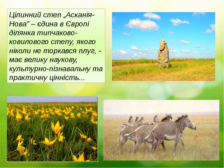 """Цілинний степ """"Асканія-Нова"""" – єдина в Європі ділянка типчаково-ковилового ст..."""