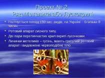 Проект № 2 Ряд Метелики або Лускокрилі Налічується понад 150 тис. видів, на У...