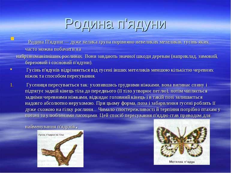 Родина п'ядуни Родина П'ядуни — дуже велика група порівняно невеликих метелик...