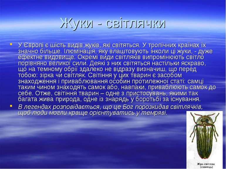 Жуки - світлячки У Європі є шість видів жуків, які світяться. У тропічних кра...