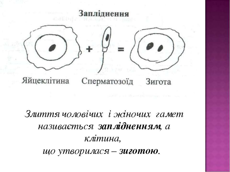 Злиття чоловічих і жіночих гамет називається заплідненням, а клітина, що утво...