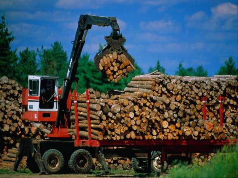 Знищення лісів