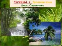 ЗУПИНКА І Тропічна зона Клас Саговники