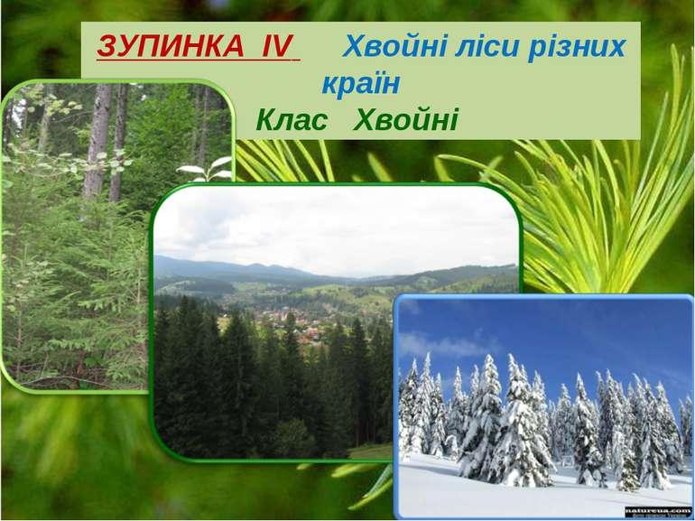 ЗУПИНКА ІV Хвойні ліси різних країн Клас Хвойні