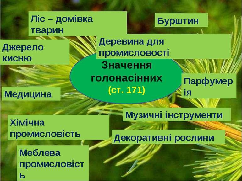 Значення голонасінних (ст. 171) Джерело кисню Ліс – домівка тварин Деревина д...