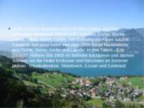 Wald Schweiz besetzen etwa 1/4 des Landes. Auf den Schweizer Mittelland Array...