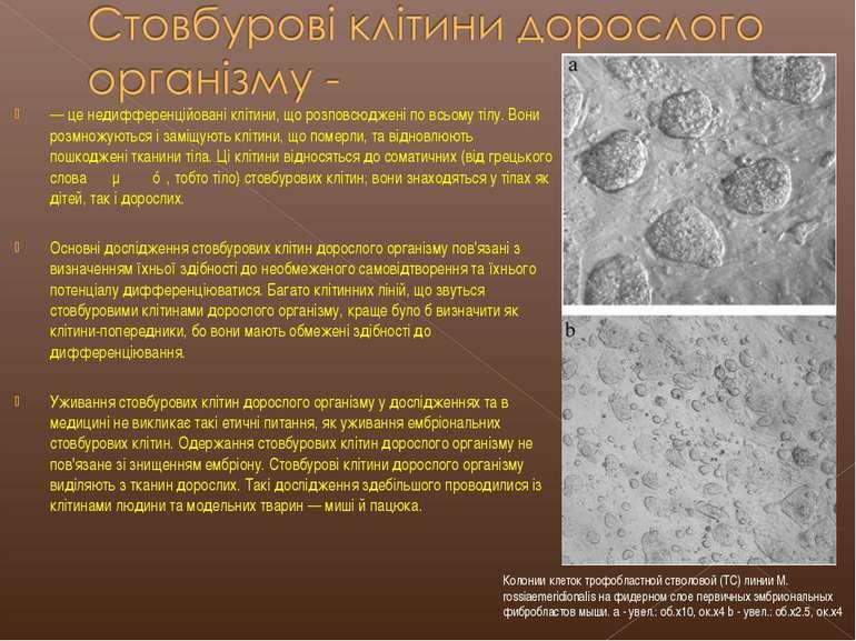 — це недифференційовані клітини, що розповсюджені по всьому тілу. Вони розмно...