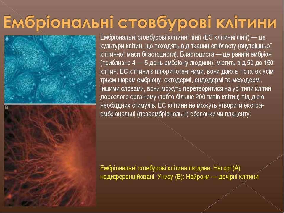 Ембріональні стовбурові клітинні лінії (ЕС клітинні лінії) — це культури кліт...