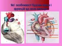 Які особливості будови серця і функцій що воно виконує?