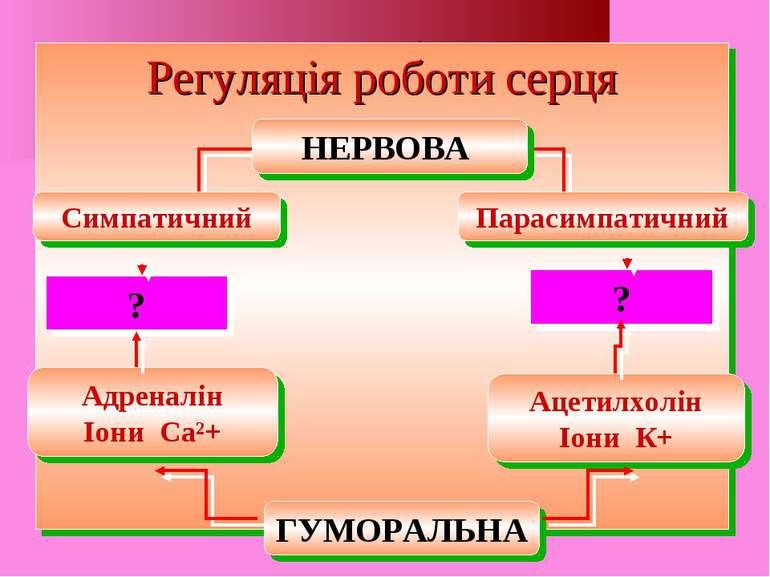 Регуляція роботи серця Регуляція роботи серця Парасимпатичний Ацетилхолін Іон...
