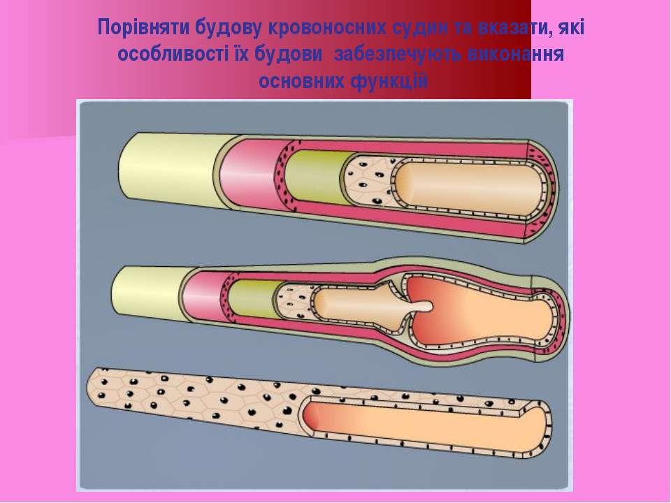 Порівняти будову кровоносних судин та вказати, які особливості їх будови забе...