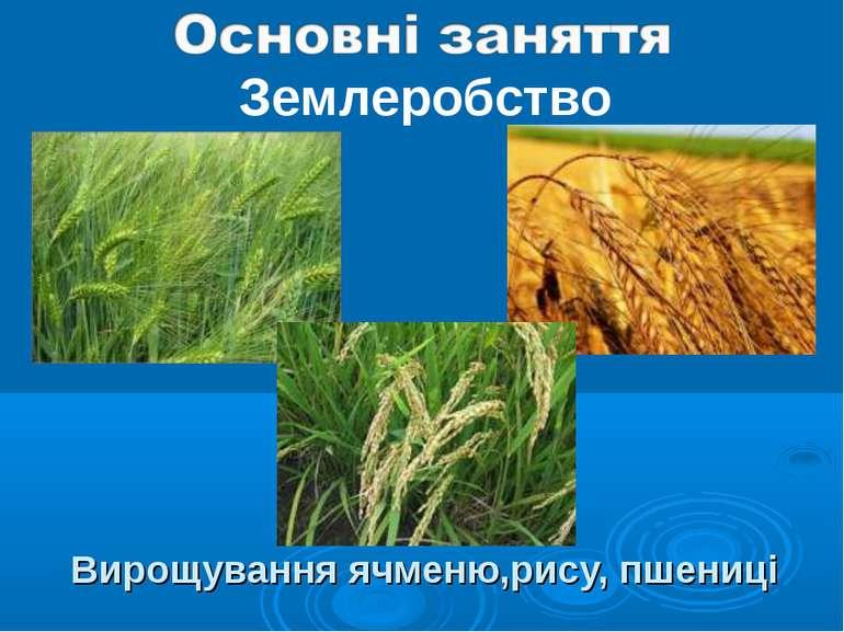 Вирощування ячменю,рису, пшениці Землеробство