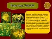 Види роду Звіробій Види роду Звіробій на відкритих ділянках зі зрідженим трав...
