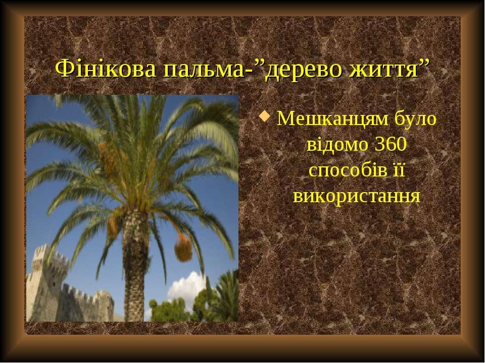 """Фінікова пальма-""""дерево життя"""" Мешканцям було відомо 360 способів її використ..."""