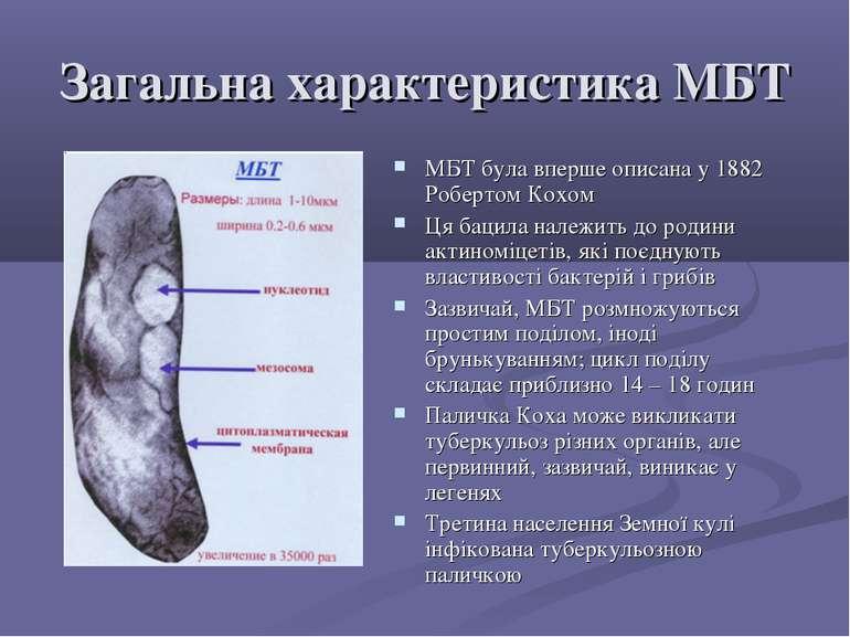 Загальна характеристика МБТ МБТ була вперше описана у 1882 Робертом Кохом Ця ...