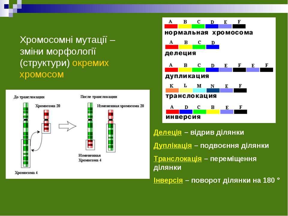 Хромосомні мутації – зміни морфології (структури) окремих хромосом Делеція – ...