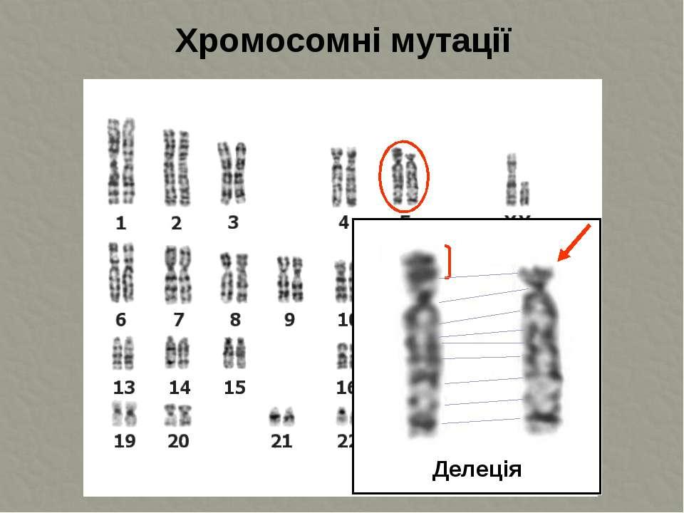 Хромосомні мутації Делеція