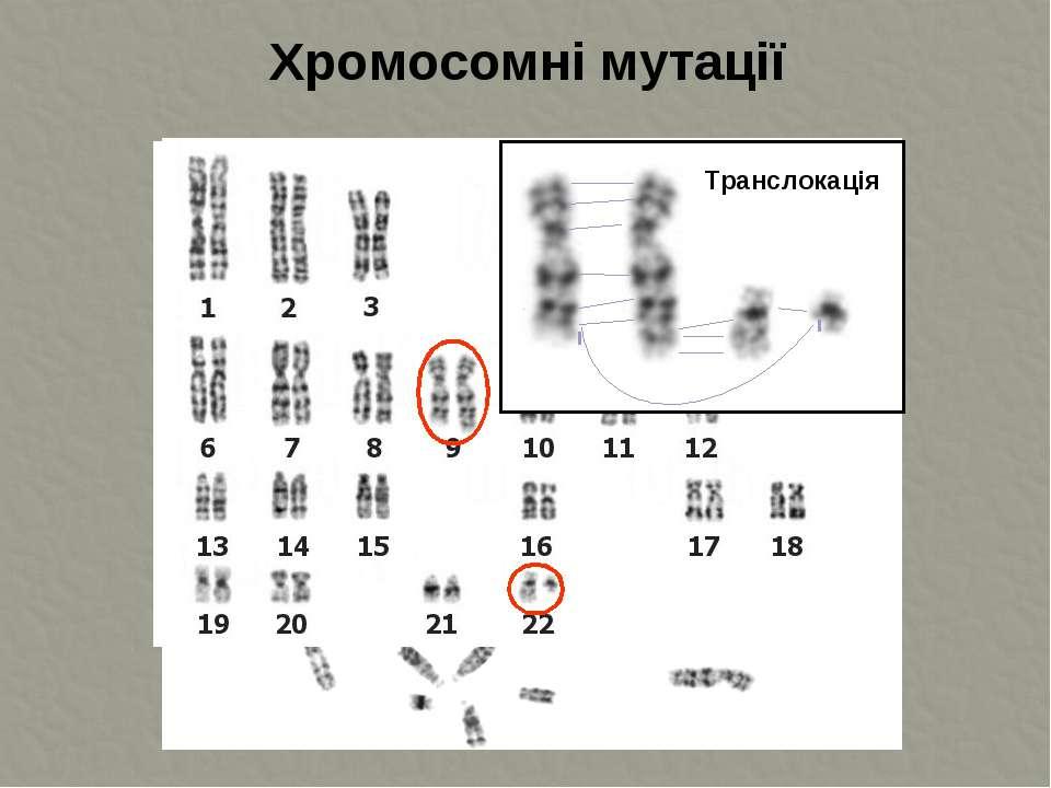 Хромосомні мутації Транслокація