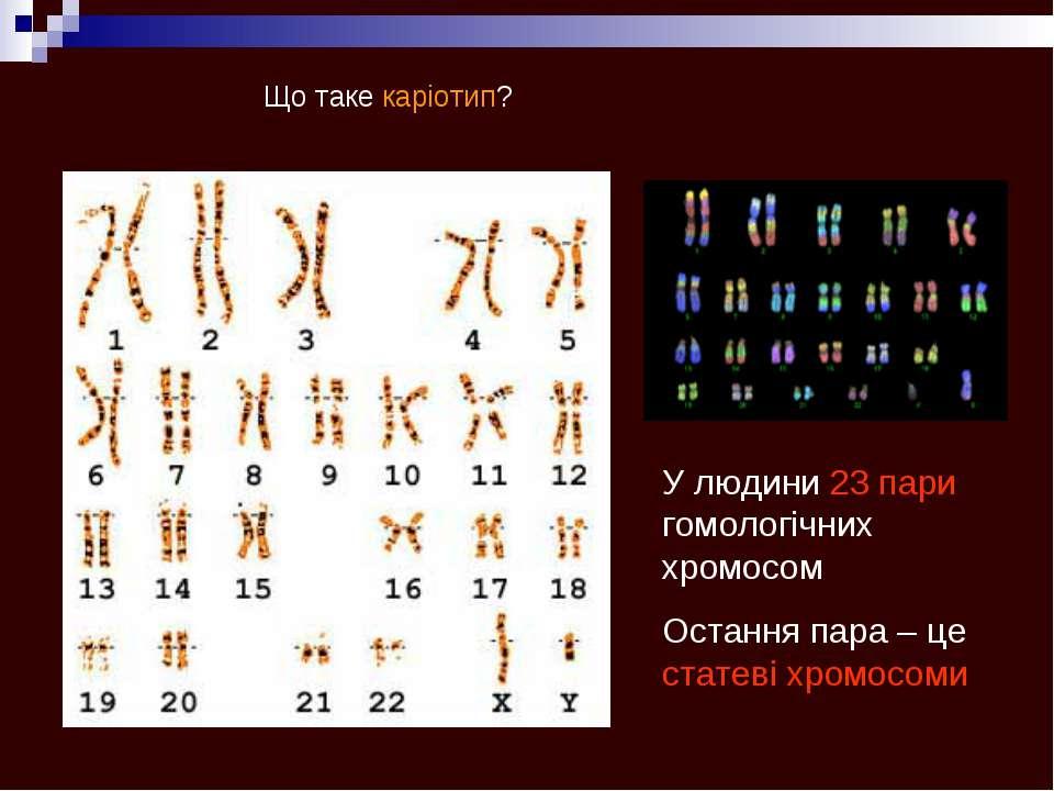 Що таке каріотип? У людини 23 пари гомологічних хромосом Остання пара – це ст...