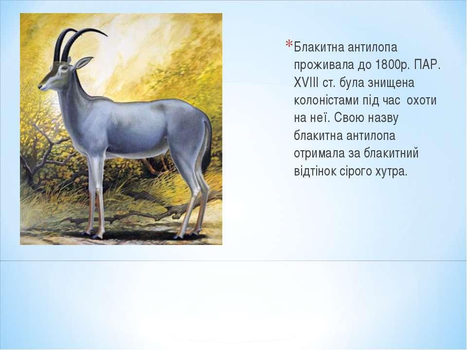 Блакитна антилопа проживала до 1800р. ПАР. XVIII ст. була знищена колоністами...