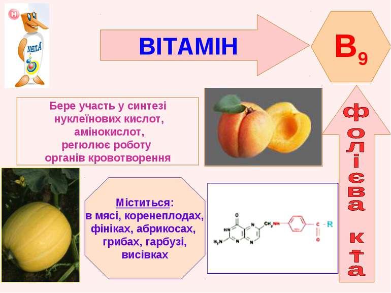 ВІТАМІН B9 Бере участь у синтезі нуклеїнових кислот, амінокислот, регюлює роб...