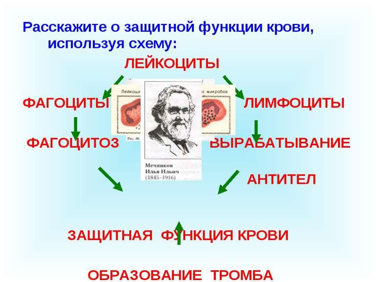 Расскажите о защитной функции крови, используя схему: ЛЕЙКОЦИТЫ ФАГОЦИТЫ ЛИМФ...